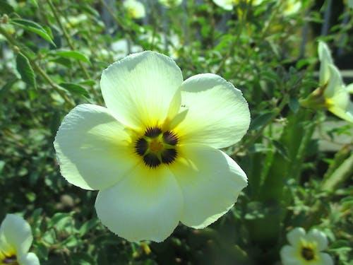 Foto profissional grátis de campo de flores, flores bonitas, flores desabrochando, flores lindas