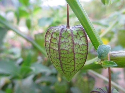 Foto profissional grátis de árvore frutífera, fruta, frutas tropicais, frutífera