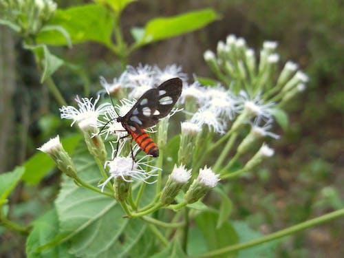 Foto profissional grátis de borboleta, borboleta - inseto, borboleta em uma flor, flor