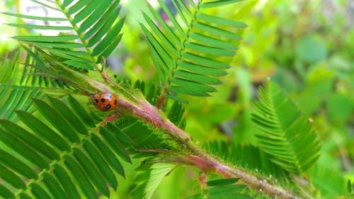 Foto profissional grátis de flores desabrochando, fotografia de insetos, Indonésia, inseto