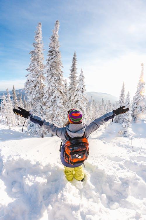 Immagine gratuita di cielo, foresta, giorno soleggiato, inverno