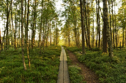 Free stock photo of forest, green, landscape