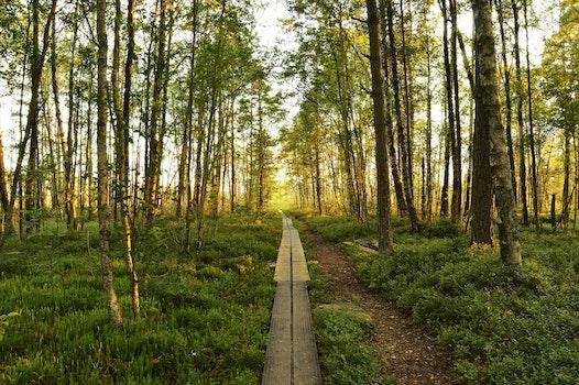 Free stock photo of landscape, nature, sun, sunshine