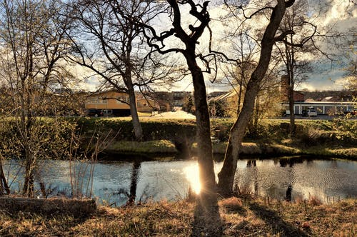 Free stock photo of houses, nature, sun