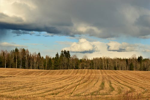 Free stock photo of cloudy, field, forest