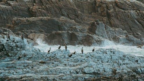 Birds on Rocky Shore