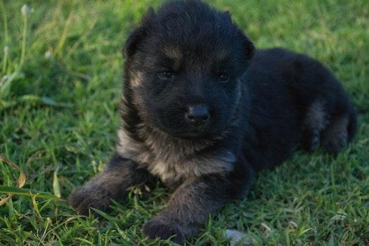 Free stock photo of dog, cute, eyes, black