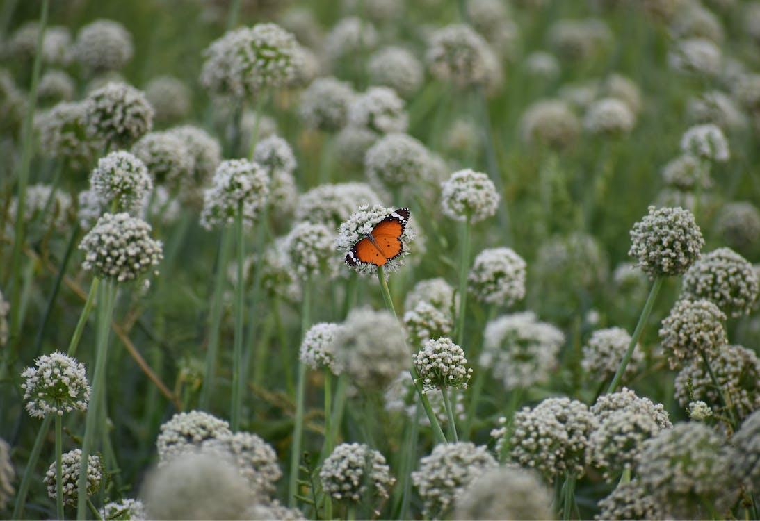 Mariposa Salvaje Sentada En Flor En El Jardín