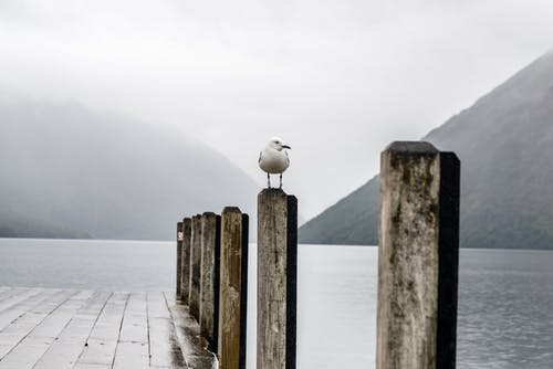 White Bird Perching On Dock Post