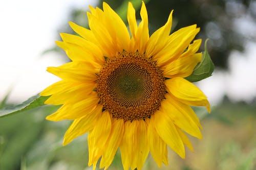 Kostenloses Stock Foto zu blühen, blumen, gelb