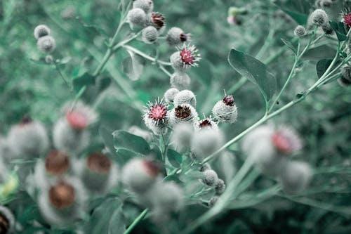 Free stock photo of beauty of nature, bush, bushes