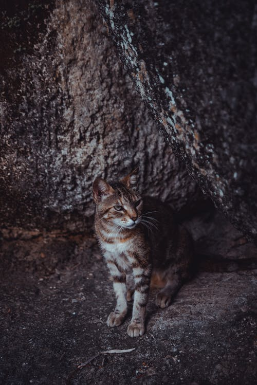 Brown Tabby Cat on Brown Rock