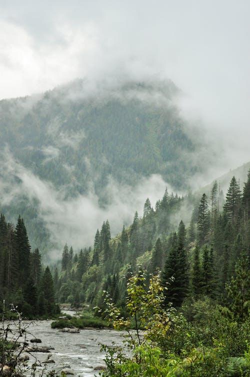 Ingyenes stockfotó bokrok, erdei fák, erdei folyó, erdő témában