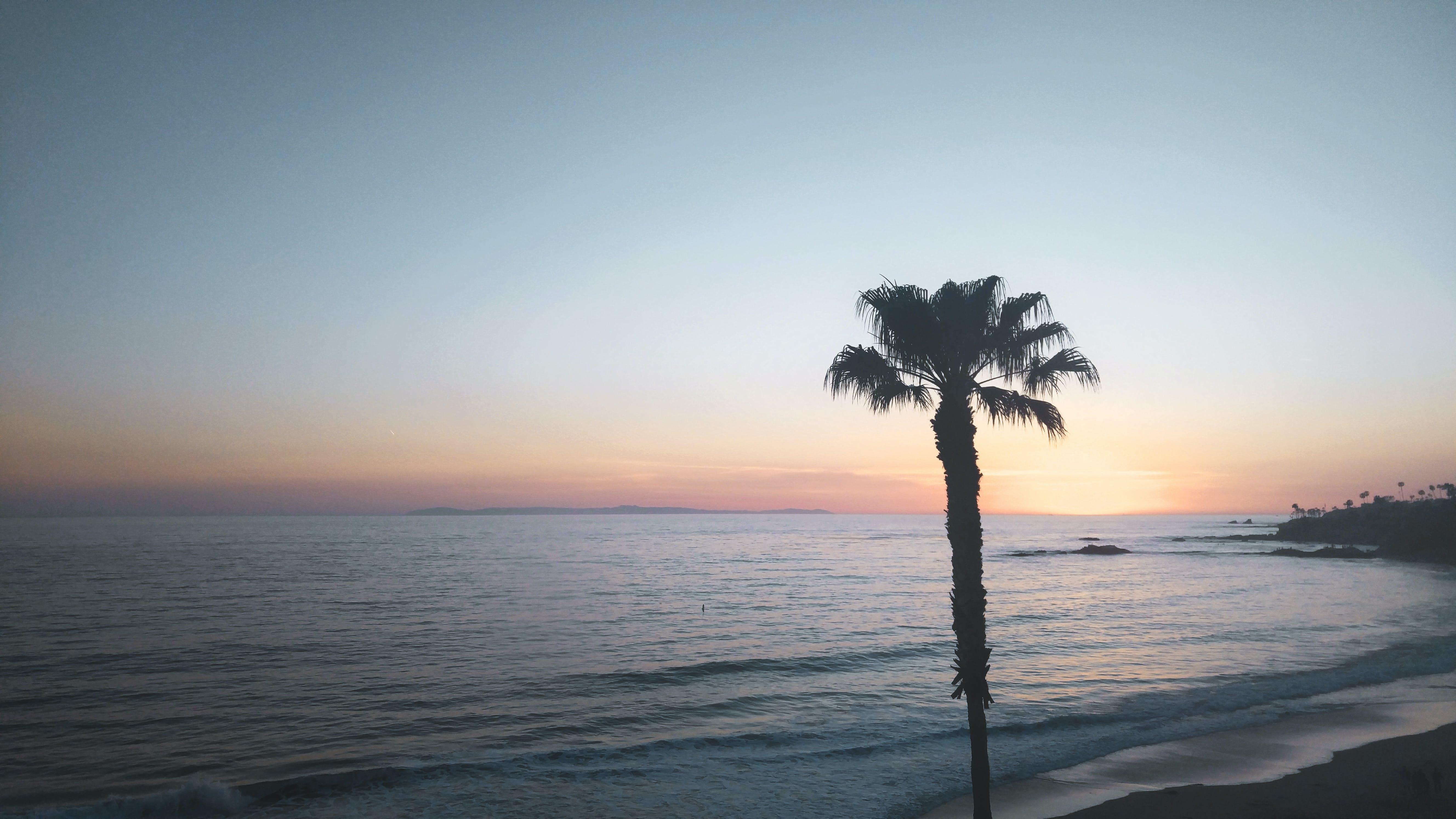 Free stock photo of beach, ocean, palm tree, sunset