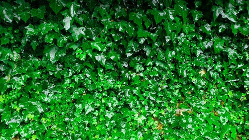 ぬれた葉, 湿った葉, 濡れる, 緑の無料の写真素材