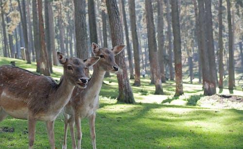 Immagine gratuita di alberi, animali, boschi, campo