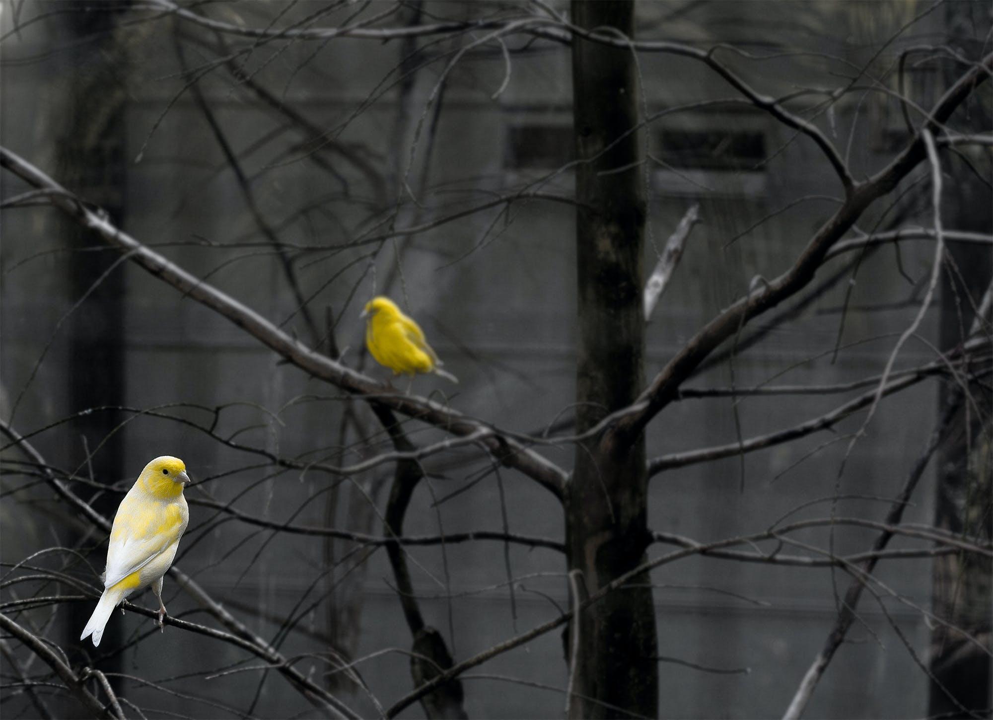 คลังภาพถ่ายฟรี ของ กรงนกใหญ่, ขนนก, คู่, ตะวันลับฟ้า