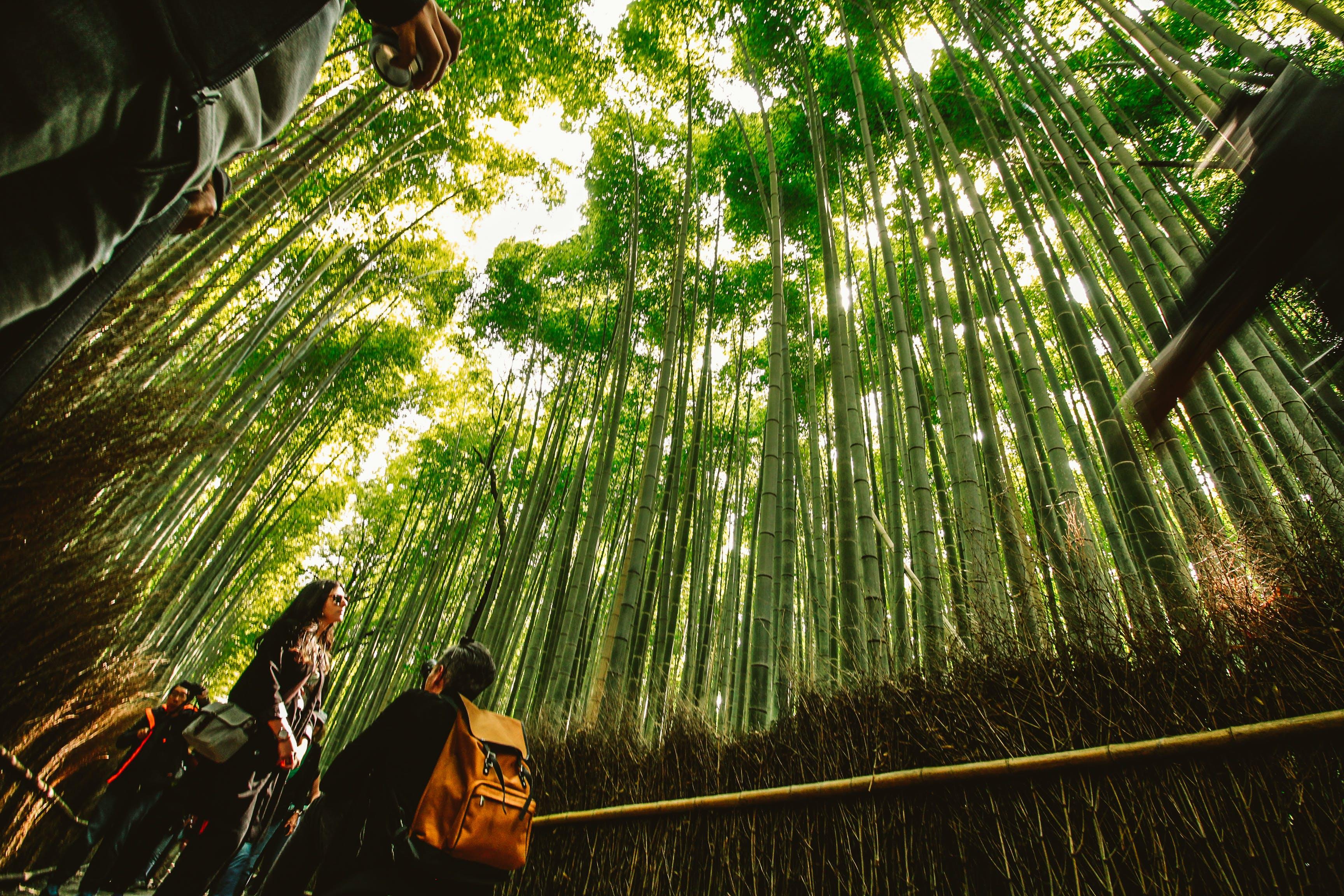 Free stock photo of arashimaya, couple, japan, mothernature