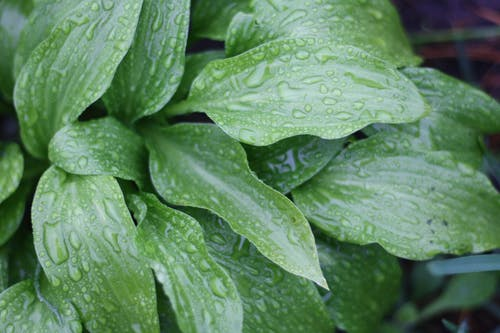 Ilmainen kuvapankkikuva tunnisteilla kastehelmet, kasvi, kasvu