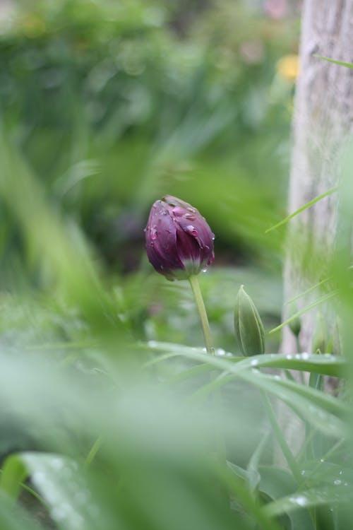 Purple Flower Bud in Tilt Shift Lens