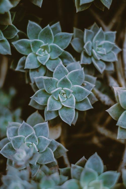Immagine gratuita di botanico, colore, crescita, esterno