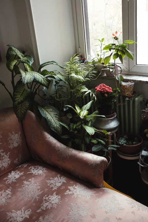 Green Plants Near Window