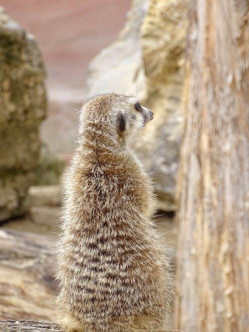 Foto profissional grátis de animais, animais fofinhos, animal, bonitinho
