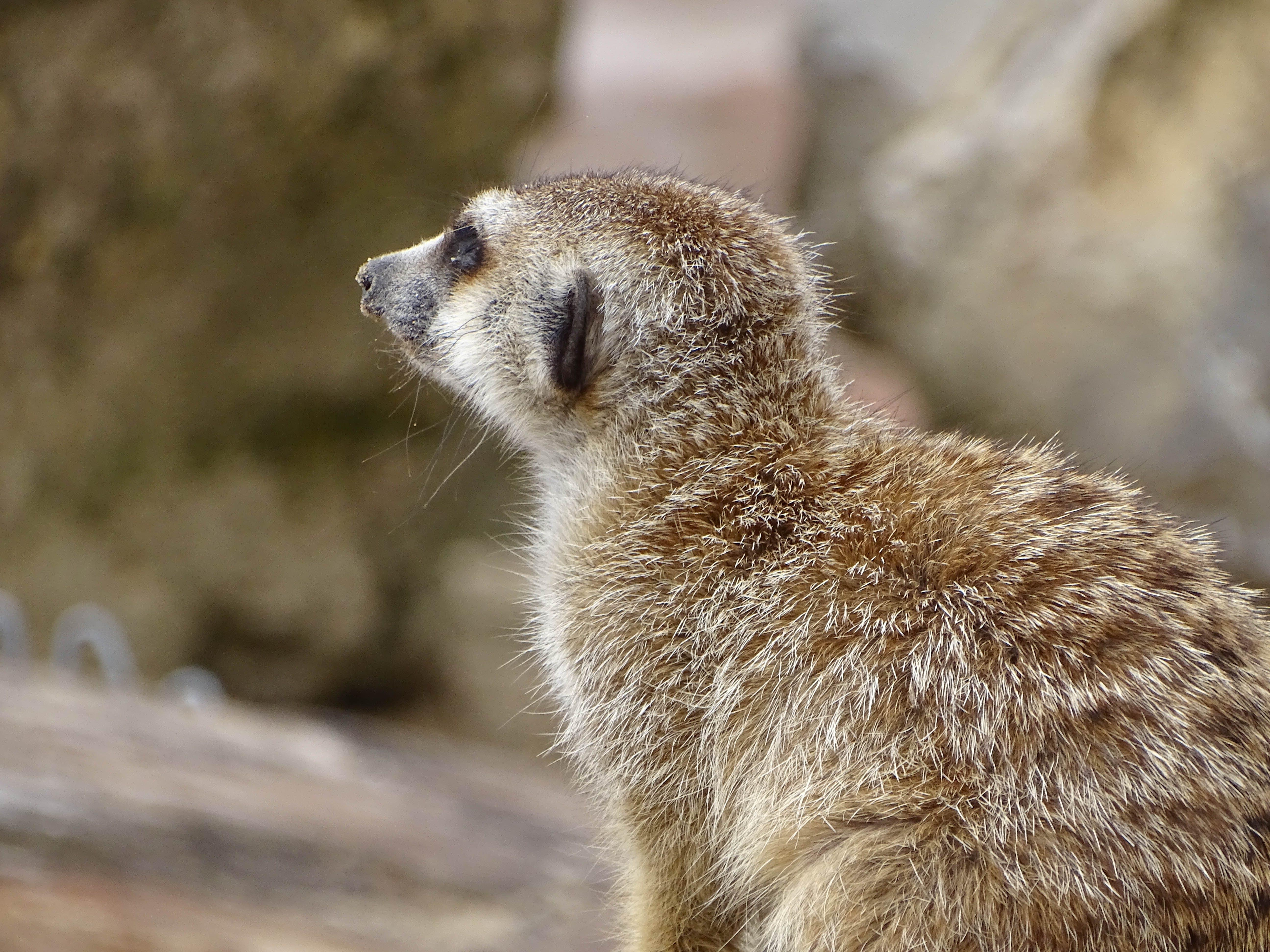 Δωρεάν στοκ φωτογραφιών με γλυκούλι, ζώα, ζώο, ζωολογικός κήπος