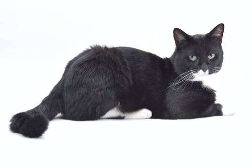 Free stock photo of huiskat
