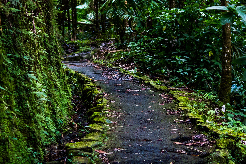 Free stock photo of rainforest, San Juan Puerto Rico, walk way