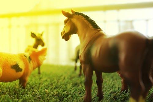 Free stock photo of animais, cavalo, cidade, desafio