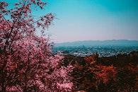 city, nature, sky