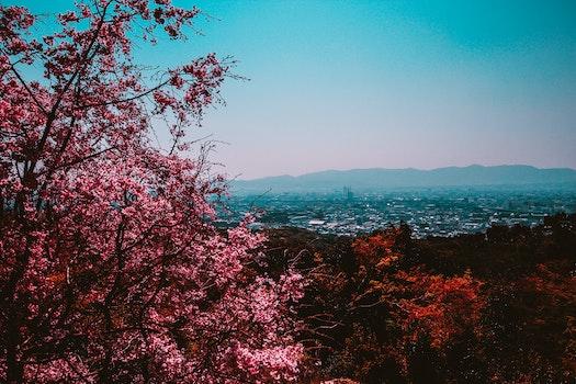 Free stock photo of city, nature, sky, trees