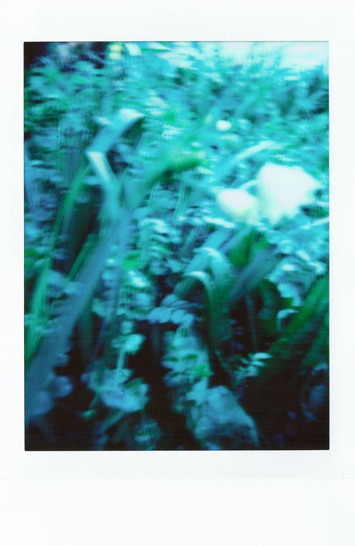 Polaroid Photo Of A Green Plant