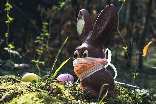 Gratis stockfoto met buiten, buitenshuis, chocolade konijn, coronavirus
