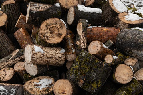 ツリーログ, パイル, ログ, 森の中の無料の写真素材