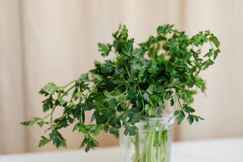 Bright green parsley in glass vase on table