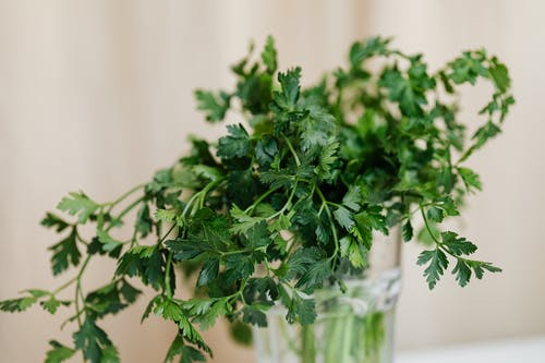 Aromatic fresh parsley in glass vase on table