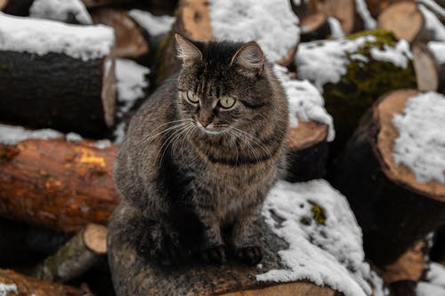 Brown Tabby Cat on Rock