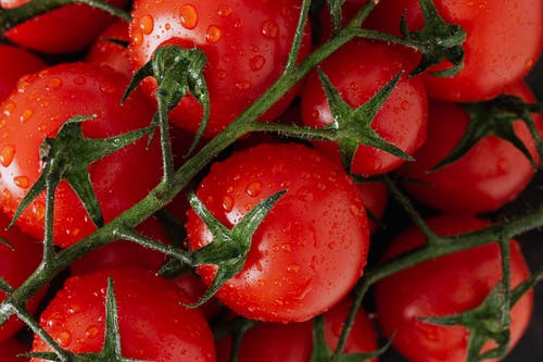 Fresh ripe red tomatoes with water drops
