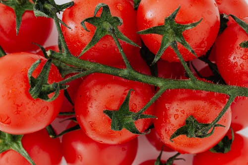 Bunch of fresh ripe tomatoes on branch