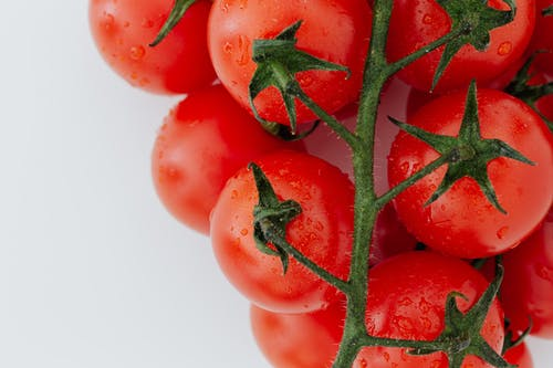 Branch of tomatoes with water drops