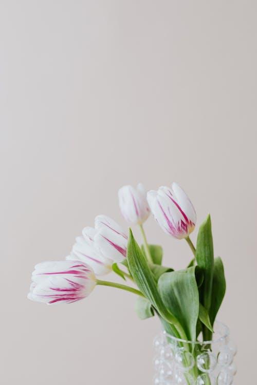 Bunch of romantic white purple flowers in vase leaning down near gray wall in studio