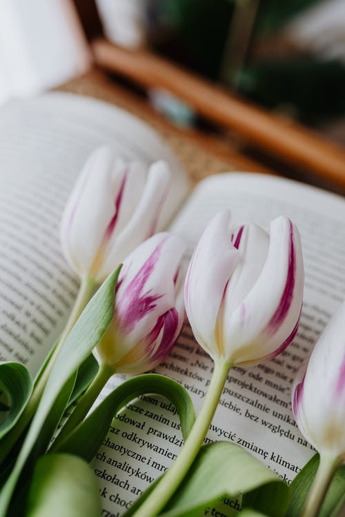 Fragrant flowers on blurred page of book placed on wooden chair in room