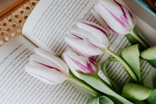 Bunch of elegant white violet fresh flowers lying on page of fiction at home