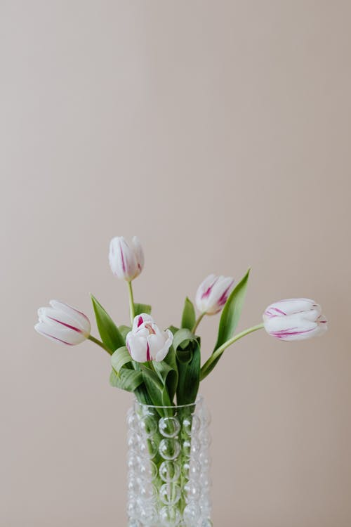 Creative glass vase with delicate white tulips near beige wall