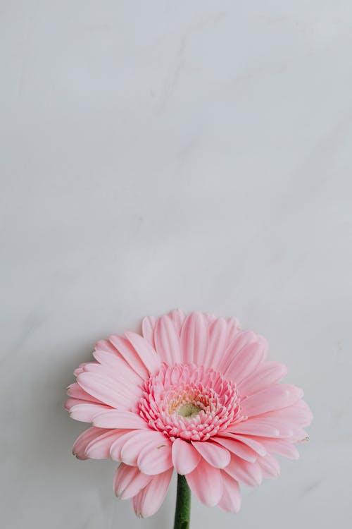 Darmowe zdjęcie z galerii z aromat, botaniczny, botanika, cichy