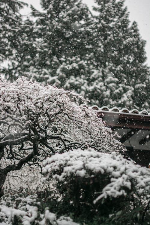 Darmowe zdjęcie z galerii z mróz, ogród, ośnieżony, pogoda