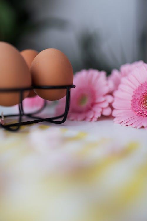 Immagine gratuita di fiori rosa, natura morta, profondità di campo, sfocatura
