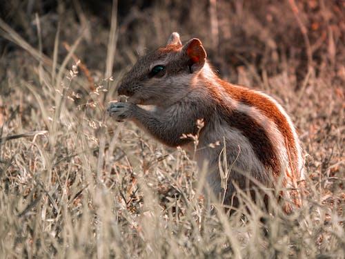 動物, 動物攝影, 可愛, 囓齒動物 的 免費圖庫相片